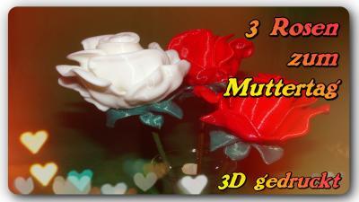 3 Rosen zum Muttertag<br />