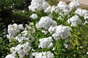 Weißer Garten 3 jahre horb am neckar alles weiß