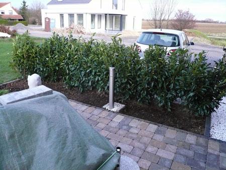 Unsere Kirschlorbeerhecke als Windschutz an der Terrasse