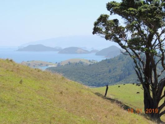Landscape towards Coromandel