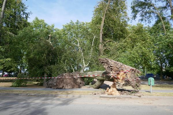 Holzminden: umgestürzter Baum