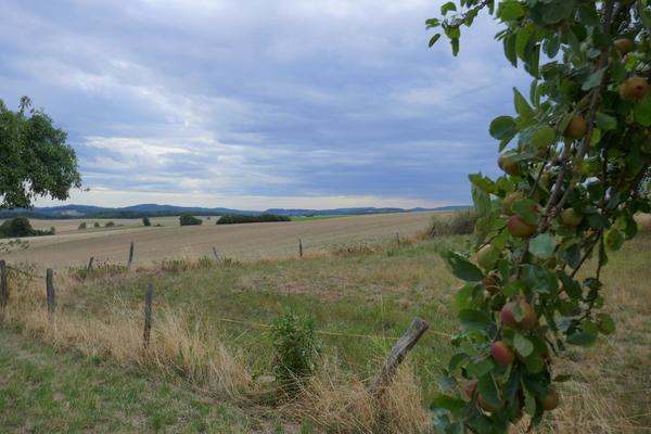 Äpfel Ottenstein