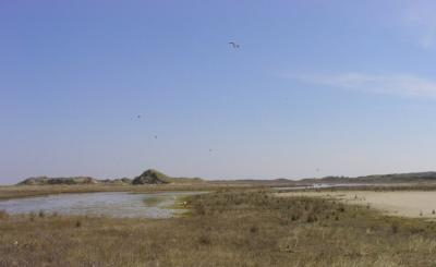 Naturschutzgebiet im Osten von Borkum