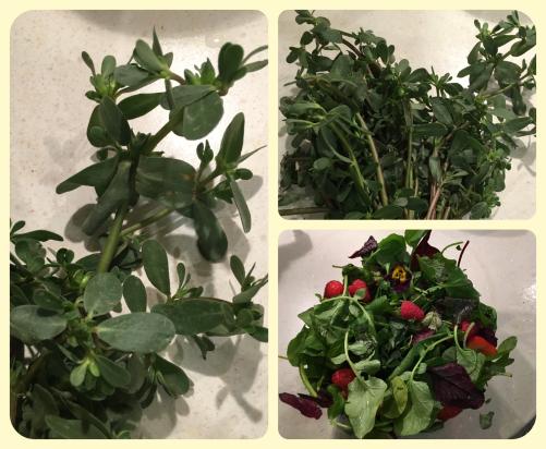 Salat oder Gebüsch?