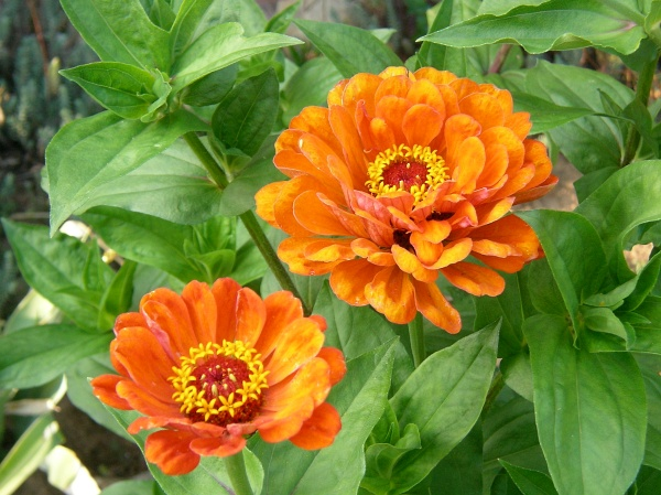 augenblicke ein garten im august. Black Bedroom Furniture Sets. Home Design Ideas