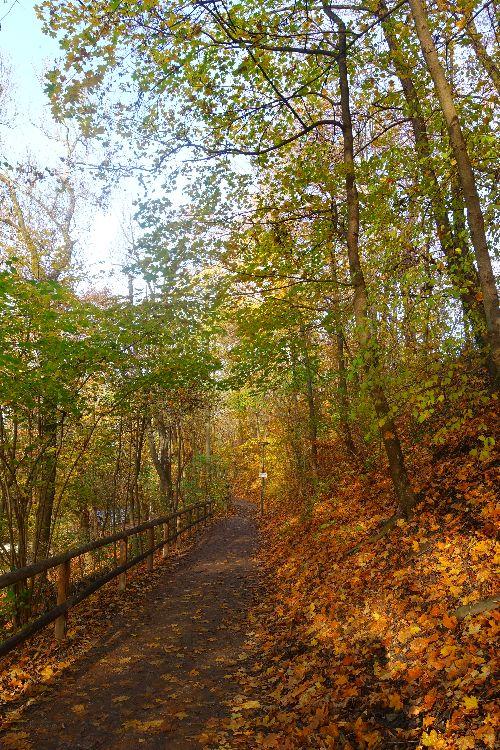 Herbst am Isarhochufer