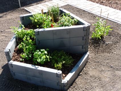 L E B E N S W E I S E : Küchenkräuter Pflanzen Topfen Kubeln Terrasse