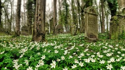 Jüdischer Friedhof bei Buchen-Bödigheim