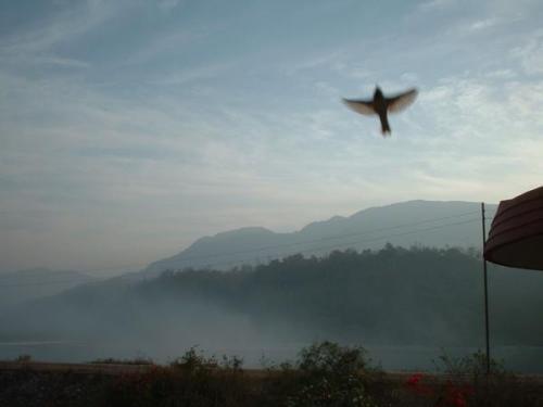 Morgennebel am Ganges
