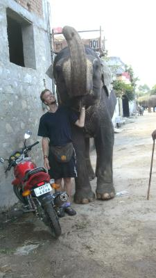 at the elephant farm in Amer