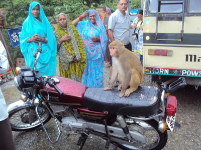 monkeys are everywhere, also on bikes.