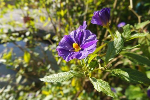 Blumen am See