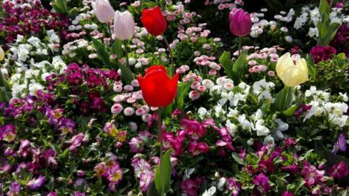 Farbenfrohes Blütenmeer von den Luisenparkprofis zusammen gestellt!