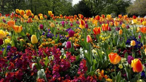 Prachtvolle Tulpenvariationen im Luisenpark
