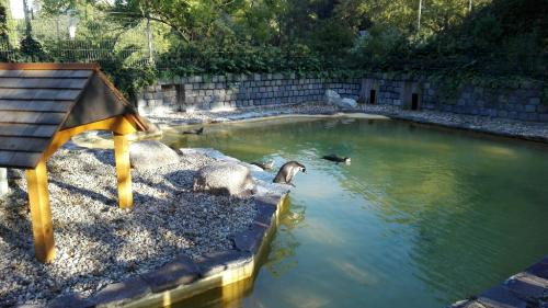 Pinguine am Pool im Luisenpark