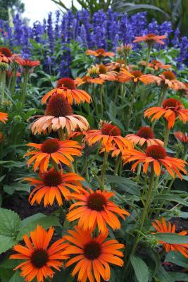 Farbenspiel der Blumen im Luisenpark - immer gut für ein schönes Bild