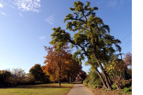 Erholung pur Rund um den Luisenpark
