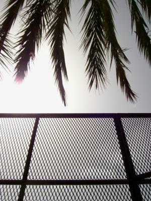 Tennis unter Palmen.
