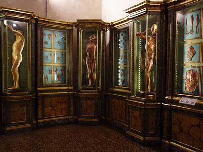 Palazzo Poggi, Bologna: Le cere anatomiche di Ercole Lelli.