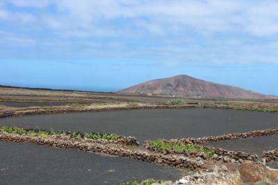 Felder auf Lanzarote