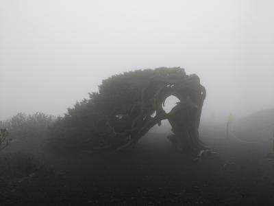 El Sabinar bei Nebel