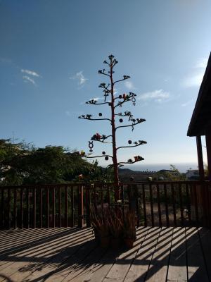 Weihnachtsbaum mal anders<br />