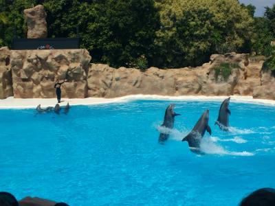Delphin-Show im Loro Parque