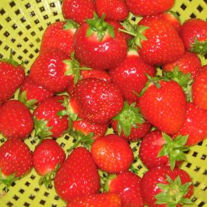 Erdbeeren sind leckere Früchte. Auf diesem Foto ist mindestens ein Exemplar einer Erdbeere abgebildet.