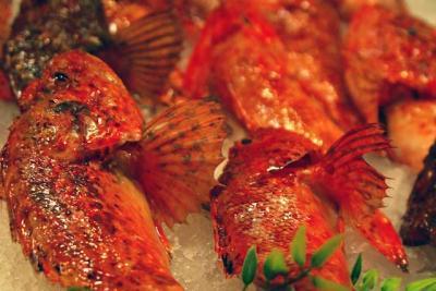 Fisch frischer Fisch roter Fisch