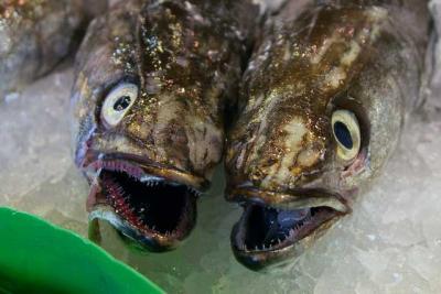 frischer fisch fischköpfe