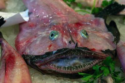 Seeteufel Fisch frischer Fisch Mittelmeer