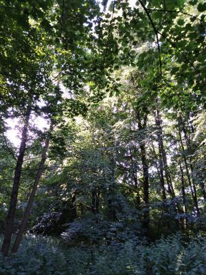 Der Wald vor lauter Bäumen.