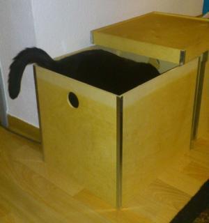 Mojo in einer Kiste