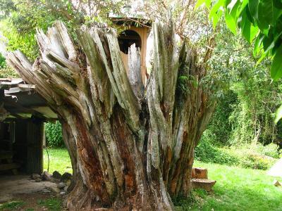 Kein Baumhaus in dem Sinne, aber dennoch ein stilles Örtchen ;)