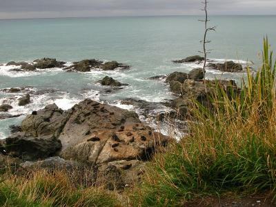 Robbenkollonie vor Kaikoura am Okiwi-Lookout
