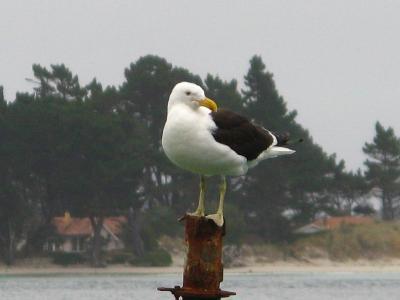 Der Albatross oder auch das Albert Ross ... albern..
