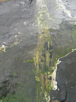 Baumstamm versteinert unter Wasser
