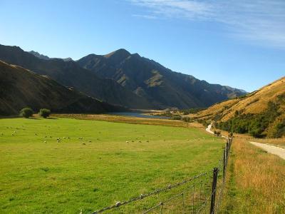 Das ist Neuseeland - Schafe, Berge und See am Lake Moke