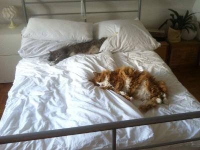 Katzenbefall