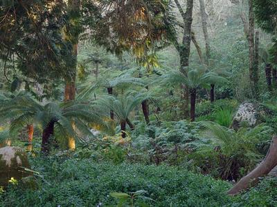 Palmfarne der Königin im Parque da Pena, Sintra