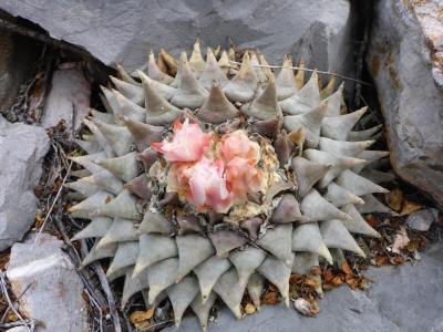 ...Cedral, SLP, México...