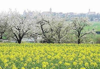 Frühling --- <br /> Innerlichkeit: Da ist draussen der Frühling angekommen, aber ist er auch innen? Landschaft, sagt die Romantik, ist ein Spiegel der Seele. Umgekehrt geht das wohl nicht. Das Bewußtsein bestimmt das Sein, von innen nach außen, was war zuerst da?