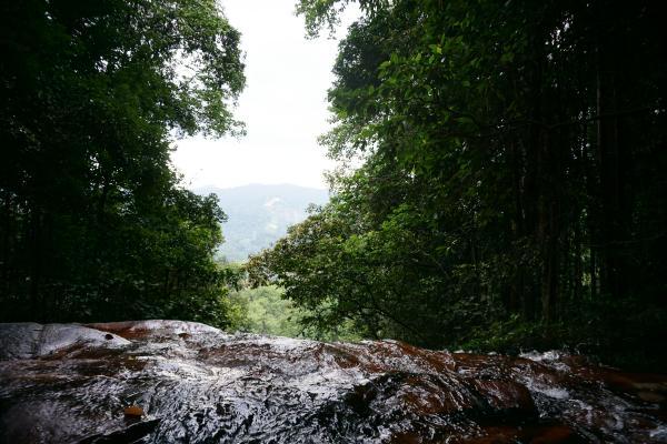 ...konnte man auch durch den sonst extrem dicht bewachsenen Regenwald schauen.
