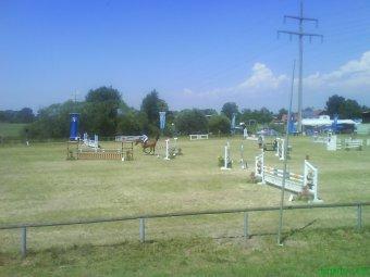 evi_horse