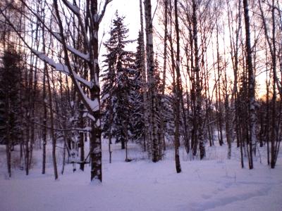 [Bild: verschneiter finnischer Wald]