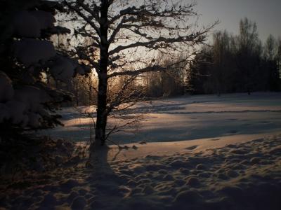 [Bild: verschneiter Park, Gegenlichtaufnahme]
