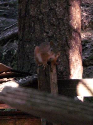 [Bild: überrascht guckendes Eichhörnchen an Futterstelle]