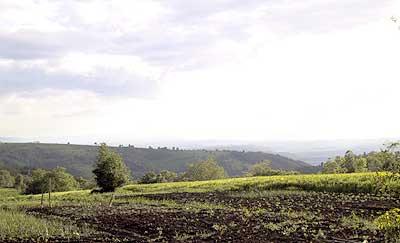 Countryside. (novala)