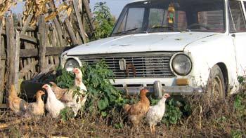 Old cars. (novala)