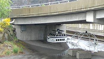 Baby ferry hiding. (novala)